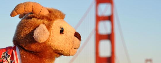 Plüsch-Hennes vor Golden Gate Bridge
